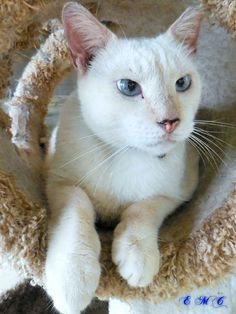 Good Sunday morning to you ---- paws & claws... Rattman >^..^< #cats #love #instagood #photooftheday #beautiful #cute #happy #fashion #followme #me #follow