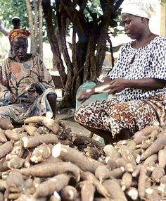USAID supports the commercial potential of cassava peel for livestock feed in Nigeria