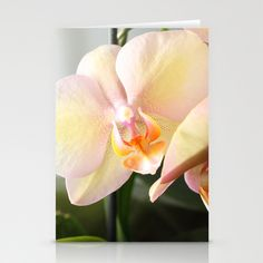 Orchids Stationery Cards by Fine2art - $12.00