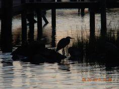 A bird (egret?) at sunset near the pier.