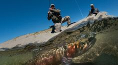 Newsela | Huge trout saved from close call with extinction