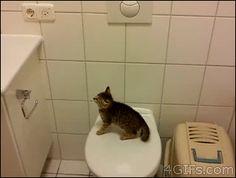 【画像】動物がジャンプに失敗する瞬間可愛いすぎwwwwwwwwwww