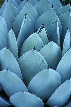 Cactus  Lauren B Montana