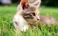 可爱猫咪壁纸桌面  #动物# #可爱# #优质#