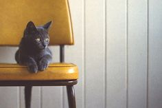 cat on a yellow chair