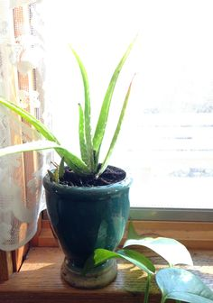 This allow plant is loving it's new home!  Get your Stoneware Cottage Vase Candle at www.northernlightscandles.com