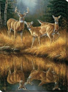 This Whitetail Reflections Whitetail Deer Wrapped Canvas Art is the perfect gift for the avid hunter and animal lover alike. It features 3 whitetail deer in front of a water source showing their refle Wildlife Paintings, Wildlife Art, Animal Paintings, Animal Drawings, Deer Paintings, Drawing Animals, Original Paintings, Deer Photos, Whitetail Deer Pictures