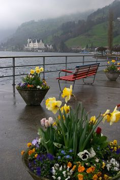 Spring flowers...so pretty! Luzern, Switzerland