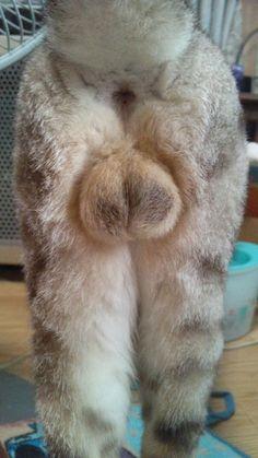 祭りじゃぁぁぁ!!Twitterで突如開催された「#お尻祭り」珠玉の猫ケツ20選