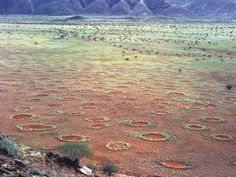 Fairy circles discovered in Australia may finally solve one of nature's great mysteries