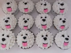 More Bichon cupcakes,, I'm gonna make these for Teddy's bday next year!