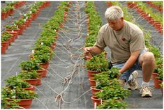 Fiction: Drip irrigation cannot be used in nurseries. Actually, we offer a wide range of nursery irrigation products including brand name drip emitters, micro sprayers, micro sprinklers and drip irrigation products . Herb Seeds, Garden Seeds, Micro Sprinkler, Drip Irrigation System, Seeds Online, Jefferson County, Spice Things Up, Herbs, Canning