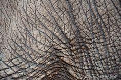 Elephant skin | Elephant skin textures for dino