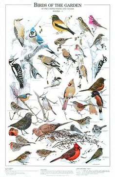 Birds of a Feather fly together: B.O.G Winter I Chart, illustrations by Artist Larry McQueen
