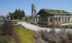 The gorgeous living roof on Amy's Kitchen Drive-Thru Restaurant in San Francisco offsets carbon emissions and provides habitat for wildlife.