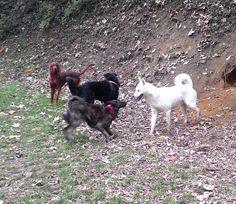 - Torino con Peja, Lea e Duke Duke, Animals, Animales, Animaux, Animal, Animais, Peacocks