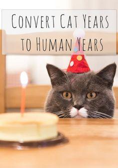 Convert Cat Years to Human Years