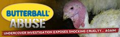 MFA Undercover Investigation: Butterball Abuse - The abuses shown in this video are identical to the abuses documented in last year's Butterball investigation which led to criminal cruelty to animals charges and convictions. These behaviors are cruel, inhumane, and injurious to the birds. I am appalled at the disrespect these workers have toward the lives of other living creatures. These behaviors are cruel, inhumane, and injurious to the birds.