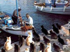Gatinhos esperando pescadores com os peixes