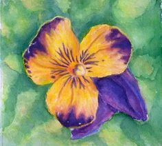 Song of the Pansy