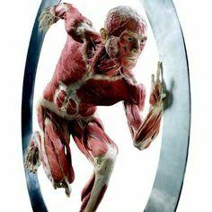 Gunther von Hagens Body Worlds exhibit. http://www.bodyworlds.com/en.html