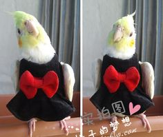 Hand made Pet clothes Clothes Parrot Bird Cockatiel cockatoo Parakeet Macaw Conure Birdlover on Aliexpress.com | Alibaba Group