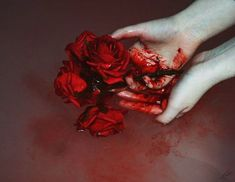 blood, rose, and red εικόνα