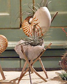 DIY Seashell Planters - With their natural beauty, seashells make lovely and distinctive planters.