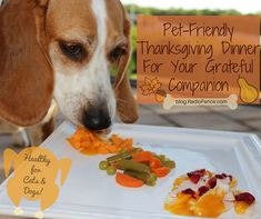 Healthy Thanksgiving dinner for dogs and cats - so easy!