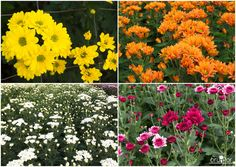 Aquí la gran variedad de margaritas que puedes encontrar en Bruflor ¿Eres dueño de una floristería? ¡Nosotros te ayudamos!