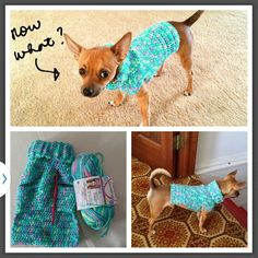 "Chihuahua crocheted sweater. He didn't like it at first and gave me that ""now what"" look but he got over it."