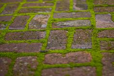 i want to plant moss between brick on my garden path- here is a good website on how to do it (not the website for the image): http://www.porch-and-patio-ideas.com/tips/decorating-with-moss.html