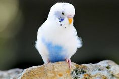 Nikon D300 w/80-400    Tweety!     See THESE beautiful photos of turquoise exotic birds & more. Check THIS Out & the latest Videos, Tips & Trends in Photography @ http://www.photopinns.com