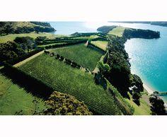 """Man O'War Vineyards on Waiheke Island, New Zealand, as seen in Marlene Rossman's report on """"Bordeaux Down Under"""" in Sommelier Journal."""