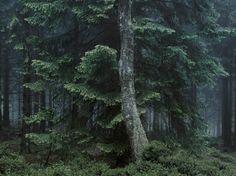 Wald : Michael Lange Fotografien