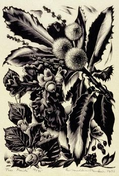 Tree Fruits, wood engraving by Agnes Miller Parker, 1936