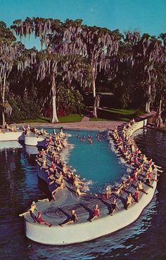"""Cypress Gardens, Florida The """"Florida Pool"""" on Lake Eloise. This was used in an Esther Williams movie. Florida Pool, Destin Florida, Old Florida, Vintage Florida, State Of Florida, Cypress Gardens Florida, Costa, Esther Williams, Winter Haven"""