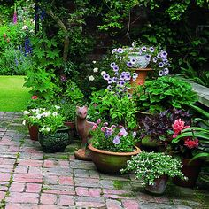 Gardening in containers  Potted plants have special needs. Follow these tips to help them thrive.