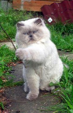 "The sorceress:  ""Abracadabra!  Grow cat-nip, Grow!!"""