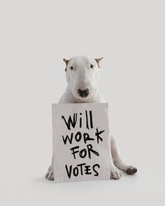 Will work for votes!