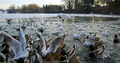 A Winter's Day on the lake at Mote Park
