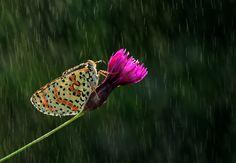 Rain ... - null