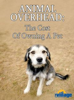 Animal Overhead: What does it cost to own a pet?