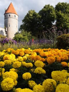 Tallinn Baltic Sea, Our World, Montenegro, Castle Interiors, Europe, History, Country, City, Castles