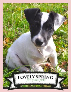 "I WANNA WIN A NEW CUSHION! Let's play with Zolux and Yummypets to win it! Just follow the steps below: Follow Zolux on Pinterest: http://ymp.io/u/Dlm / Follow Yummypets on Pinterest: http://ymp.io/u/tvb / Follow the board ""Lovely spring for your pets !"": http://ymp.io/u/sei / Repin the products you want / Results on April 13th 2015. GOOD LUCK! #game #pets #rodent #bunny #petsupply #gift #pinterest #yummypets #zolux"