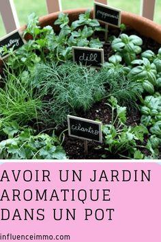AVOIR UN JARDIN AROMATIQUE DANS UN POT Balcony Garden, Herb Garden, Garden Pots, Permaculture, Garden Online, Delphinium, Plantation, Cut Flowers, Garden Planning