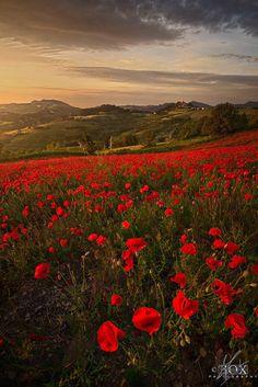 Scarlet Fields 2 by  Enrico Fossati on 500px.com (Original Size - Height: 900px - Width: 601px)