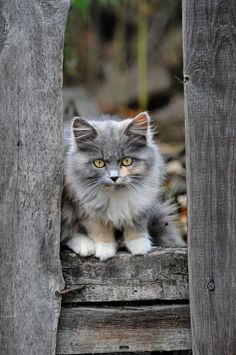 Hiding in plain sight or trying to. Beautiful little kitty