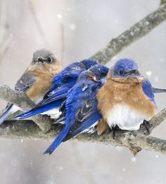 Nature did perform miracles with little feathered creatures.  They are so pretty.
