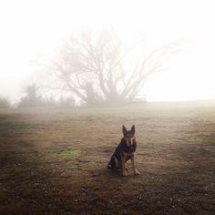 Early morning walk in the fog